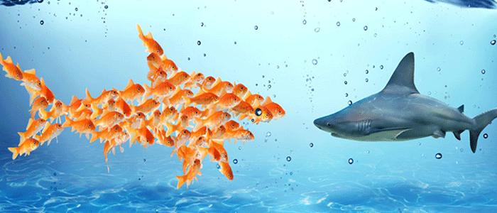 piccoli pesci collaborano per sconfiggere squali